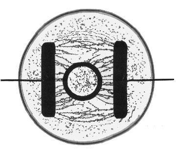 Feldlinien Leifiphysik